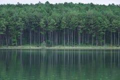 湖风景在夏天在大叻,越南 免版税图库摄影