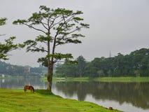 湖风景在夏天在大叻,越南 库存图片