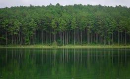湖风景在大叻,越南 免版税图库摄影