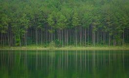 湖风景在大叻,越南 免版税库存图片