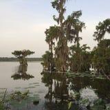 湖马丁赛普里斯海岛,路易斯安那自然保护区 免版税图库摄影