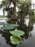 湖马丁野生生物保护区的赛普里斯海岛在路易斯安那 免版税库存照片