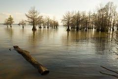 湖马里海岸线在Santee全国野生生物保护区,南 免版税库存图片