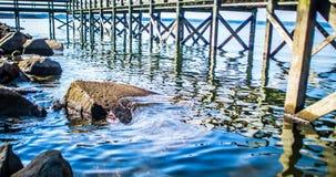 湖默里南卡罗来纳海岸和码头 库存图片