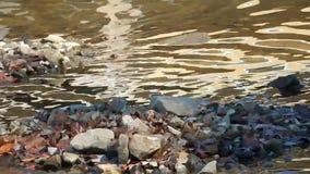 湖,水,风,波浪,秋天树反射自然摘要设计 股票录像