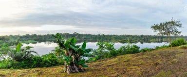 湖, Manaos,巴西的看法亚马逊雨林的 免版税库存照片