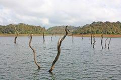 湖, Periyar国家公园 库存照片