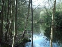 湖水地区树 库存图片