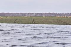 湖 域重点前景草横向大取向 灰色颜色 多云天气 图库摄影