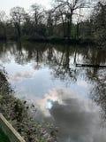 湖-树反射 免版税图库摄影