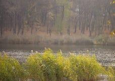 湖水波纹,秋天微风在城市公园 图库摄影