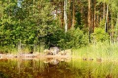 湖` s Saimaa的本质 免版税库存图片