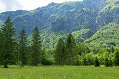湖Bohinj和Ukanc村庄在特里格拉夫峰国立公园,斯洛文尼亚 免版税库存图片