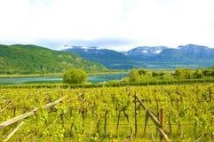 湖Caldaro葡萄园,Kalterer看见 在Caldaro湖附近的葡萄种植园在波尔查诺,波尔扎诺自治省,意大利 库存照片