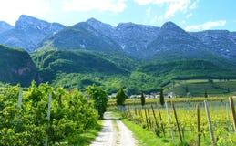 湖Caldaro葡萄园,Kalterer看见 在Caldaro湖附近的葡萄种植园在波尔查诺,波尔扎诺自治省,意大利 免版税库存图片