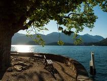 湖Como,意大利牵牛花  库存图片