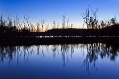 湖Durras结构树Ref黑暗 库存图片