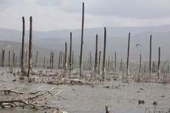 湖Enriquillo,小船 免版税库存照片