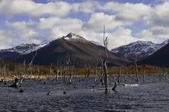 湖Escondido,火地岛,阿根廷 图库摄影