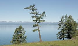 湖Hovsgol的陡峭的树木繁茂的岸 免版税图库摄影