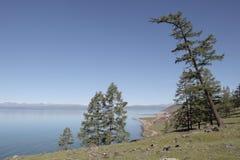 湖Hovsgol的陡峭的树木繁茂的岸 免版税库存图片