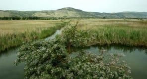 湖Hulea, Galillee,以色列 库存图片