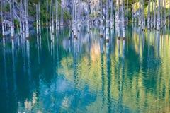 湖Kaindy凹下去的森林  库存图片