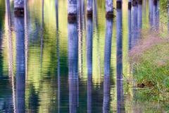 湖Kaindy凹下去的森林  免版税库存照片
