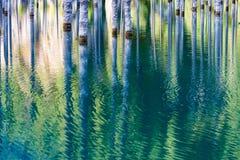 湖Kaindy凹下去的森林  免版税库存图片