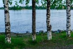 湖Kallavesi,在库奥皮奥 库存图片