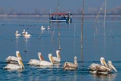 湖Kerkini在希腊 库存照片