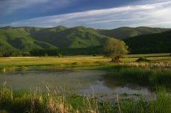 湖Kerkini,希腊 库存图片