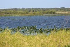 湖Kissimmee沼泽植被和开阔水域在中央小花 免版税图库摄影