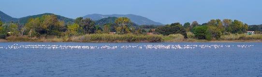 湖Korission是科孚岛非常重要生态系,象桃红色火鸟的许多候鸟停止 免版税图库摄影
