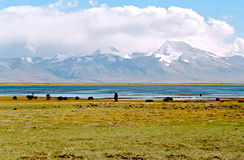 湖manasarovar西藏 免版税图库摄影