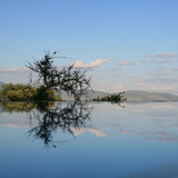 湖manyara池反映游泳 库存图片