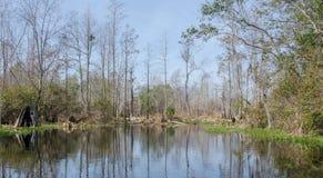 湖Minnie, Okefenokee沼泽全国野生生物保护区 图库摄影