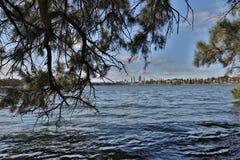 湖Monger湖树 免版税图库摄影