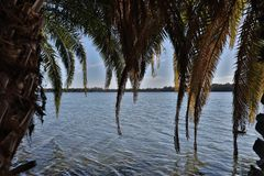 湖Monger湖树 免版税库存图片