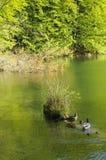 湖plitvice 库存照片