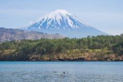 从湖Saiko的富士山有gooses的在春天 免版税库存照片