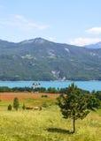湖Serre-Poncon (法国阿尔卑斯) 库存照片
