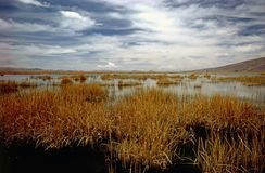 湖Titicaca 库存图片