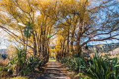 湖Tutira步行在秋天 霍克的海湾 新西兰 免版税库存照片