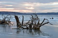湖Uvildy在日落的11月在晚秋天,乌拉尔南部,俄罗斯 免版税库存图片