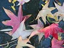 湿五颜六色的叶子 库存照片