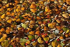 湿五颜六色的秋叶纹理在河水坝黏附了 库存图片