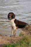 湿位的狗 免版税库存图片