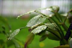 湿冬天开花的仙人掌 库存照片