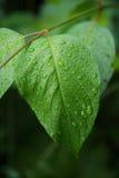 湿叶子宏指令 免版税图库摄影